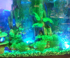 interactive aquarium led lighting 4 steps
