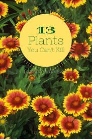 gardening flowers for beginners 10 best garden design ideas