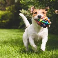 Which State Has The Most Dog Owners Per Capita According To 2016 Stats The 10 Most Dog Friendly Cities In The Usa Sparefoot Blog