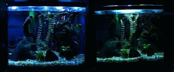 national geographic aquarium light led light for aquarium plants led low light aquarium plants light