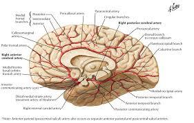 The Anatomy Of The Human Brain Posterior Cerebral Artery Neuroangio Org