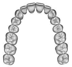 3d Head Anatomy Upper Jaw Teeth Anatomy 3d Model Anatomy 3d And Head Anatomy