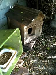 8 must haves for a top notch feral feeding station fixnation