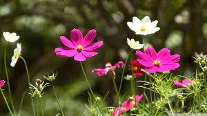 flowers popular spring hd pixel 1920x1080 512157 flowers