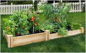 backyards backyard vegetable garden designs backyard images