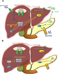 role of nuclear receptors in lipid dysfunction and obesity related