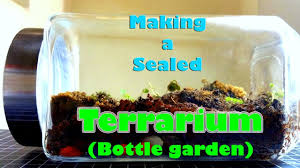 diy making a sealed terrarium bottle garden youtube