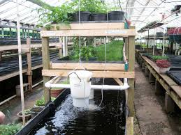 Backyard Fish Farming Tilapia Backyard Farming On An Acre Ideas