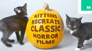 adorable kittens recreate classic horror films youtube