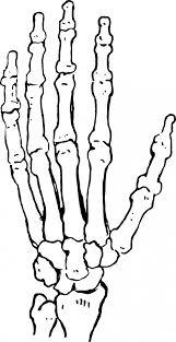 Halloween Skeleton Hands Skeleton Hand Free Stock Photo Public Domain Pictures