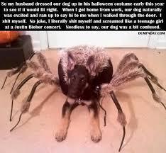 Sad Spider Meme - spider dog is sad everyone fears him now