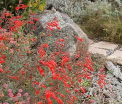 native plant nursery santa cruz santa cruz chapter cnps