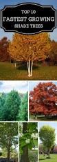 best 25 backyard trees ideas only on pinterest backyard