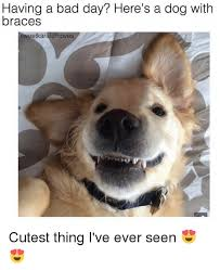 Cutest Memes - having a bad day here s a dog with braces sweetkaratemoves cutest