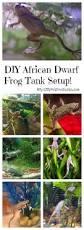 best diy african dwarf frog tank setup for 2017 spiffy pet products