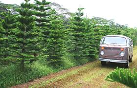 in hawaii oahu tree farm helemano farms