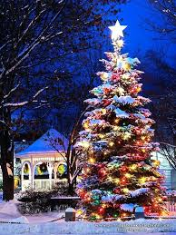 how to put lights on a tree outside outside christmas tree with lights beay co