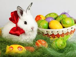 bunny easter easter bunny desktop wallpaper free 6931815