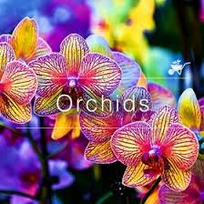 buy an orchid buy plants online in india at best prices mybageecha