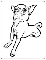 7 coloriages de chihuahua à imprimer  Coloriage One