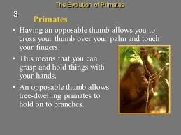 s7l5 students will examine the evolution of living organisms
