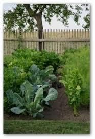 vegetable garden planting schedule