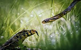 a green snake wallpapers green snake reptile 6941060