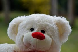 bichon frise funny fotos gratis dulce flor linda juguete oso de peluche textil