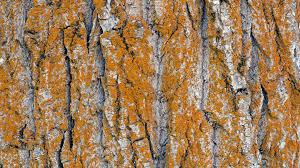 nature trees wooden surface wood pattern bark texture