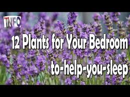 Plant For Bedroom 12 Plants For Your Bedroom To Help You Sleep Youtube