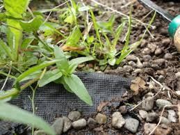why landscape fabric weed barrier doesn u0027t work solutions