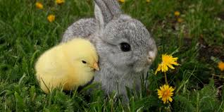 bunnies for easter here s what can happen to those easter bunnies and