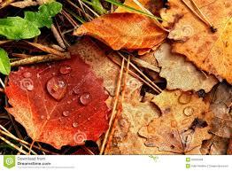 autumn leaves royalty free stock images image 35005409