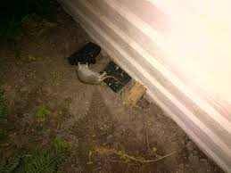 getting rid of a rat s in backyard redflagdeals com forums