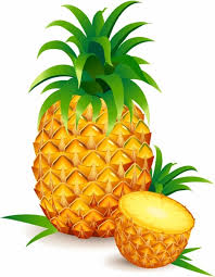 pineapple drawing free vector download 89 340 free vector for