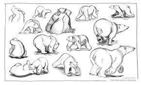 realistic polar bear drawing