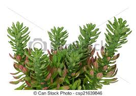 ornamental plant images and stock photos 113 519 ornamental plant