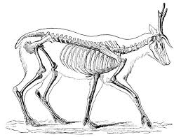 500 best animal reference images on animal anatomy