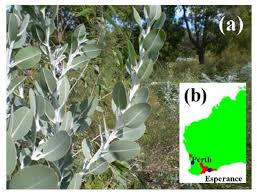 native australian plant ibima publishing nanostructures and super hydrophobic properties