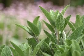 plante aromatique cuisine design exterieur plantes aromatiques cuisine culture idées