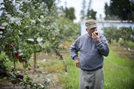 this michigan orchard grows the best apples you u0027ve never heard of