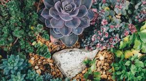 how to grow succulent terrariums pittmoss