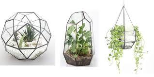 top 10 best terrariums u0026 wardian cases for your home