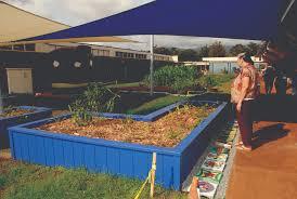 native hawaiian plants native hawaiian plants featured in new outdoor classroom garden