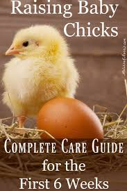 632 best backyard chickens u0026 ducks images on pinterest chicken