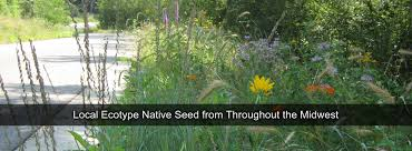 midwest native plants quality native seed custom seed mixes local ecotype midwest