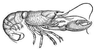 vintage thanksgiving clipart vintage clip art lobster diagram the graphics fairy