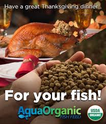 a great thanksgiving dinner for your fish aquaponics system
