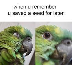 Funny Bird Memes - 23 bizarre and funny bird memes memebase funny memes
