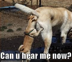Grumpy Dog Meme - 2017 funny dog meme